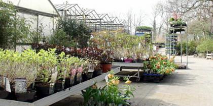 Gehölze Pflanzung und Pflege