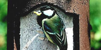 Vogelschutz, Artenschutz