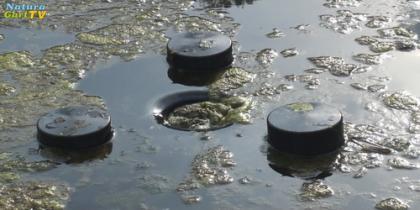 Klares Wasser im Teich - Skimmer