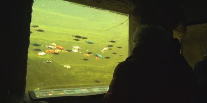 NaturaGart-Teichfenster