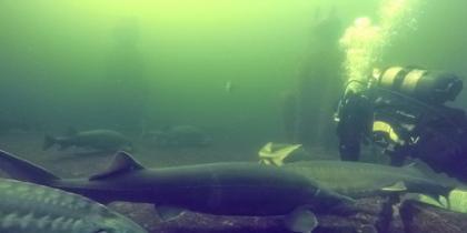 Tauchen im Unterwasserpark