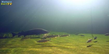 Ideale Schwimm-, Fisch- und Naturteiche