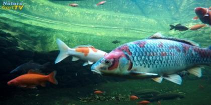 Kurz-Info Fischteiche