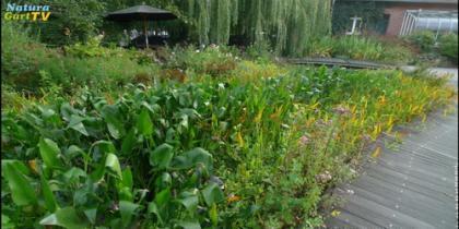 So verbessern Sie die Wasserqualität von Gartenteichen