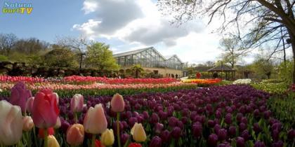 Frühlingsblüte im NaturaGart-Park 2017