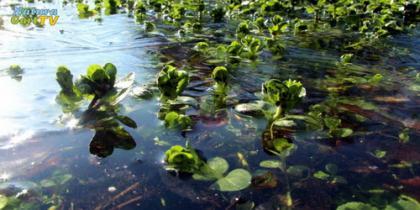 Unterwasserpflanzen im Winter