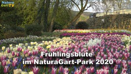Frühlingsblüte im NaturaGart Park 2020