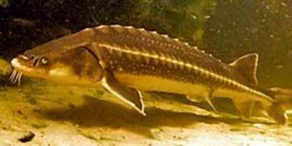 Stabiler Fischteich
