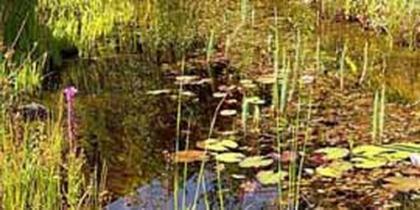 Libellen-Teich