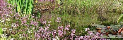 Frosch-Teich