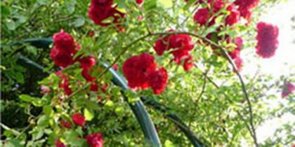 Rosenbögen, Laubengänge