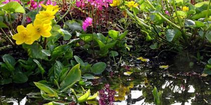 Über Teichpflanzen