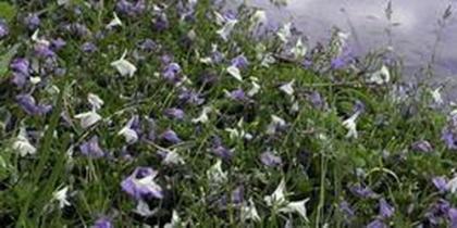 Feuchtzonen-Pflanzen