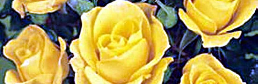 Naturagart Shop Bücher über Rosen Online Kaufen