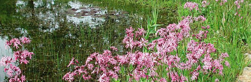 Naturagart shop ufermatten f r pflanzenufer online kaufen for Gartenteich onlineshop