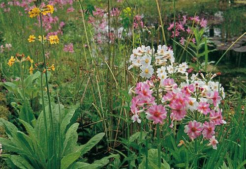 Blütenpracht am Teich