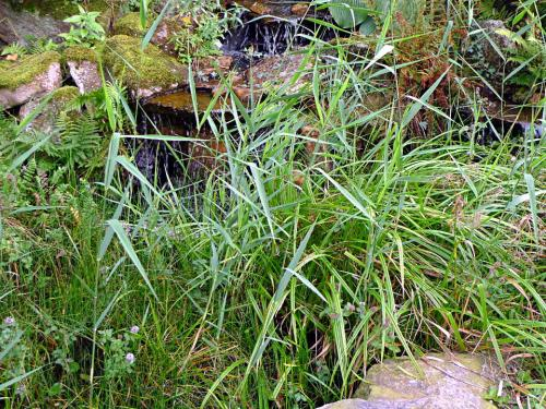 Welche Teichpflanzen wuchern?