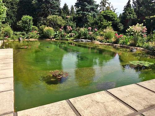 Natürliche Teichlandschaft