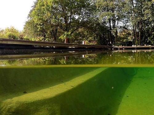 Sicherheits-Stufe im Teich