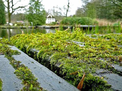 Holzstege: oft schnell kompostiert