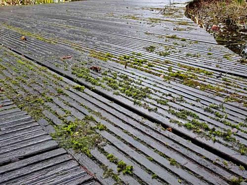 Oberflächen aus Holz muss man pflegen