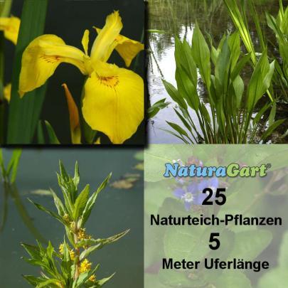 Natur-Teichpflanzen 25