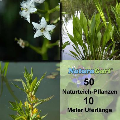 Natur-Teichpflanzen 50