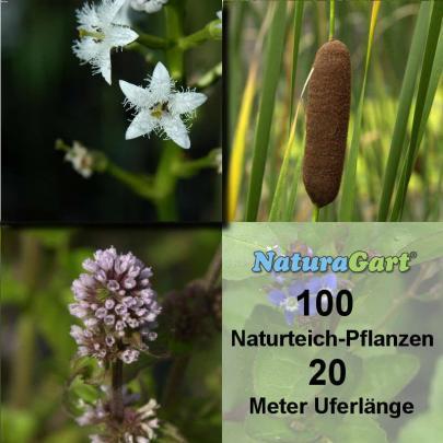 Natur-Teichpflanzen 100