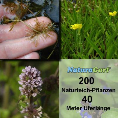 Natur-Teichpflanzen 200