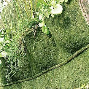 Taschenmatten-Pflanzen