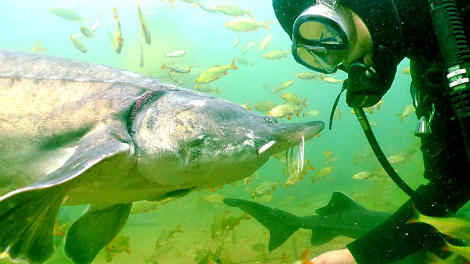 Kann man in einem Schwimmteich Fische halten?