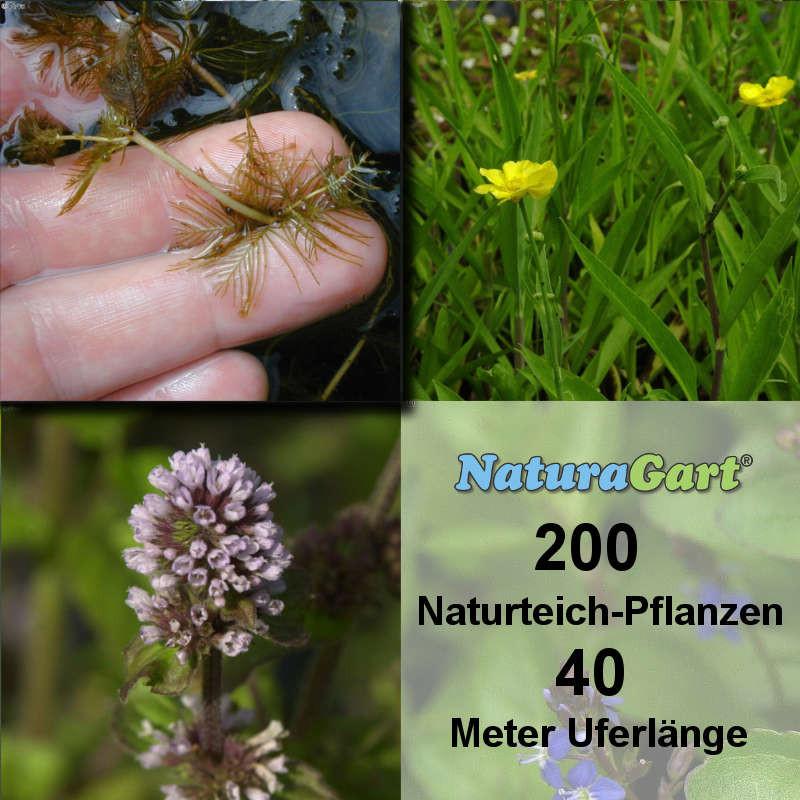 Naturagart shop natur teichpflanzen 200 online kaufen for Naturteich pflanzen