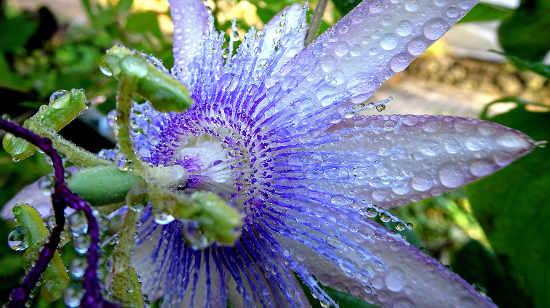 Gartenteich schwimmteich fischteich naturteich zum for Naturteich pflanzen