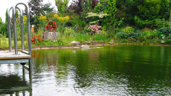Gartenteich schwimmteich fischteich naturteich zum for Bilder von gartenteichen