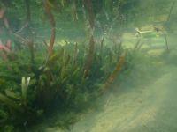 geeignete Pflanzen entziehen dem Wasser Nährstoffe