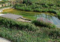 So ziemlich jeder möchte einen sauberen Teich - wie kann man das nachhaltig realisieren?
