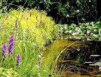 Molche, Libellen und Co. werden den Gartenteich schnell für sich beanspruchen