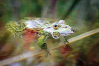 Naturagart shop frosch teich naturteich komplett for Fischhaltung im teich