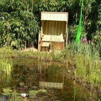 Ein Naturschwimmteich vor der eigenen Terrasse ist ein Kleinod