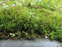 Ufermatten bewachsen und bilden so ein Polster