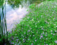 Voll bewachsene Ufermatten schützen die Teichfolie