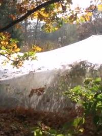 Teichnetze von NaturaGart schützen den Gartenteich vor Herbstlaub
