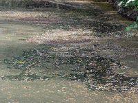 Gelangen unkontrolliert zu viele Nährstoffe in den Teich, kann ein Schlammsauger sehr hilfreich sein
