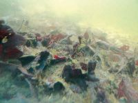 Schlammsauger entfernen Sediment vom Teichgrund