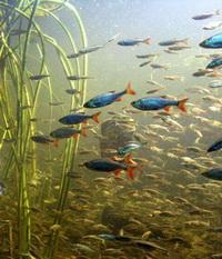Ein Fischteich ist ein Lebensraum unter Wasser