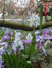 NaturaGart Blumenzwiebeln Frühlingsblumen am Waldboden