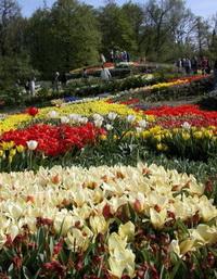 Die Tulpenblüte im NaturaGart Park mit Tulpenzwiebeln