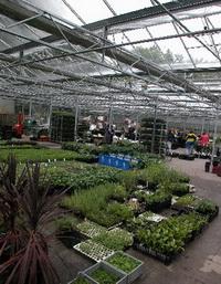 Pflanzenversand Gewächshaus