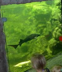 Teichfenster ermöglichen den Blick auf die Fische im Fischteich