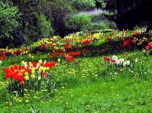 Im Frühjahr explodieren die Wiesen in prachtvollen Farben